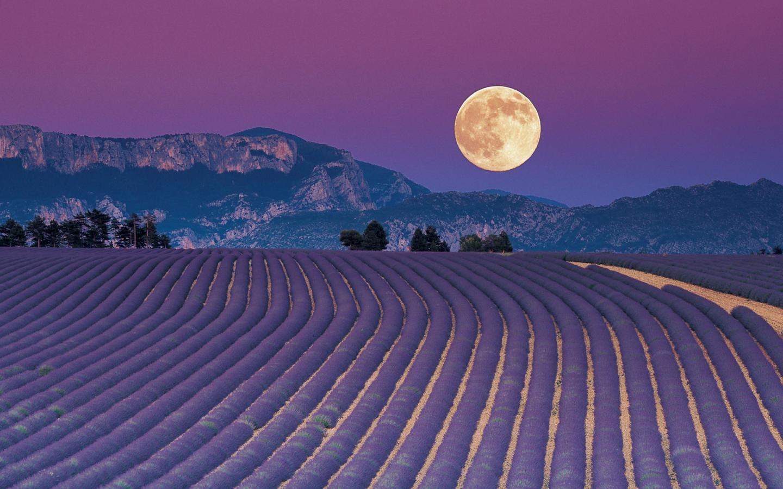 Calendario Lunare Potatura.Le Fasi Lunari E La Potatura Verdefacile Net